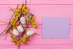 Spring Easter composition and blank card. Easter eggs, green grass, pussy willow branches and white flower in nest. Empty paper for Easter greeting Royalty Free Stock Image