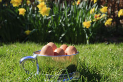 Spring - Easter egg cup (landscape). Spring - Easter egg cup with grass and flowers(landscape Royalty Free Stock Images