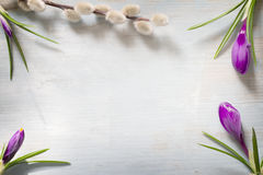 Spring easter floral abstract background with crocus and pussy willow Royalty Free Stock Image