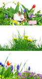Spring, Easter Royalty Free Stock Photography