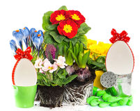 Spring easter flowers composition on white Royalty Free Stock Image
