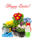 Spring easter flowers composition on white Royalty Free Stock Photos