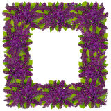 Spring Easter lilac frame Royalty Free Stock Images