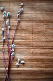 Spring Easter photo. Willow branches on a wooden substrate. Background royalty free stock photography