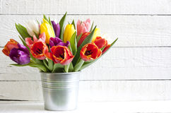Spring easter tulips in bucket Royalty Free Stock Photography