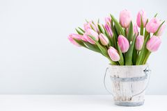 Spring easter tulips in bucket on white vintage background. Spring easter tulips in bucket on white vintage background Stock Images