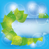 Spring eco background with green leaves. Spring eco background with fresh green leaves, water drops and paper - place for text Stock Photography