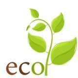 Spring eco plant Royalty Free Stock Photos