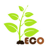 Spring eco plant Stock Photo
