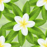 Spring ecological background with beautiful white Royalty Free Stock Images