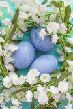 Spring eggs texture background. Spring blue eggs on a textured background Stock Images