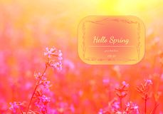Spring elegant background with pink wildflowers. Hello Spring. Watercolor greeting card of flowers. Vector illustration.  stock image