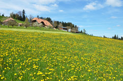 Spring in Emmental Stock Photo