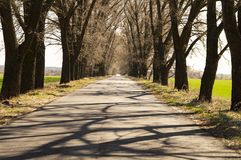 Spring empty road among trees and green grass. Spring empty road among trees, blue sky and green grass stock photography