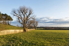 Spring English countryside landscape during beautiful sunset. Spring countryside landscape during beautiful sunset Stock Photos