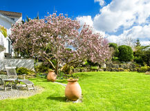 Spring english garden with blossoming magnolia tree royalty free stock photos