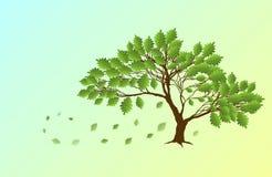 Spring English oak Royalty Free Stock Photo