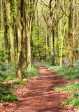 Spring in an English Wood Royalty Free Stock Photography