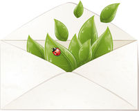 Spring envelope with leaves and ladybug Royalty Free Stock Image