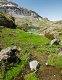 Spring in Estaube circus in French Pyrenees. Violet wild orchid flowers and spring green vegetation and watercourse in Estaube circus, the lake Gloriettes and Royalty Free Stock Image