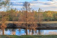 Spring evening, alder riverside reeds. Leaves early Stock Image