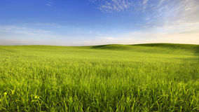 Spring evening. In the farmland Stock Photo