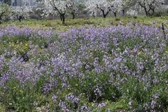 Spring. Everything blossoms. Spring landscape. The spring has come. Everything blossoms. Beautiful spring landscape Stock Image