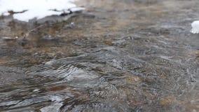 Spring för isvatten i en snabb vårström Trädfilialer som hänger över The Creek arkivfilmer