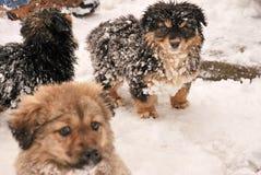 Spring för valphund i snön Royaltyfria Bilder