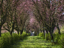 Spring in the fairyland. Spring day in a blooming promenade Royalty Free Stock Photos