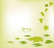 Spring faling leaves background Royalty Free Stock Photography