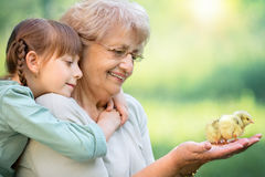 Spring family portrait. Grandmother with grandaughter are playing with chickens outdoors stock photography