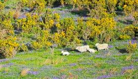 Spring farm animals stock image