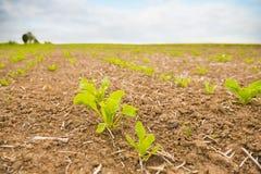 Spring farm beet Stock Photo