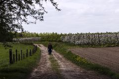The farmer at work in his fields, fruit orchards, his farm. In the spring the farmer walks through his farmland with his wheelbarrow royalty free stock photo