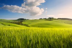 Art spring farmland; tuscany countryside rolling hills stock photography