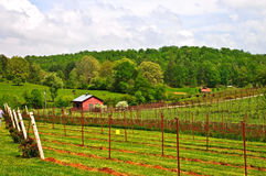 Spring Farmland and Vineyards Royalty Free Stock Photos