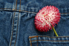 Spring fashion. Blue jeans trousers and big pink daisy Royalty Free Stock Photo