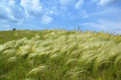 Free Spring Feather-grass And Blue Sky Stock Photo - 5071570