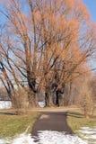 Spring in February. Spring weather in February around Lake Nokomis in Minneapolis, Minnesota Stock Photo