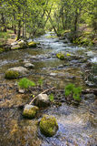 Spring fed creek Royalty Free Stock Photography