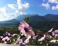 Spring feelings with flowers on an Austrian balkony