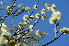 Spring Feelings #1 Royalty Free Stock Photo