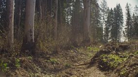 Spring in the felling. Forest felling in spring. Save the nature concept stock video footage
