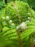 Spring fern Stock Image