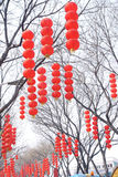 Spring Festival Royalty Free Stock Photo
