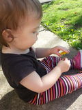 Spring fever. Girl playing with a dandelion flower in the yard Royalty Free Stock Photography