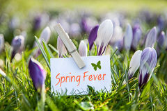 Spring Fever Stock Images