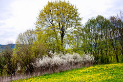 Spring field Royalty Free Stock Image