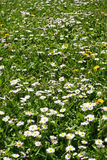 Spring field. Field full of spring flowers Stock Photo